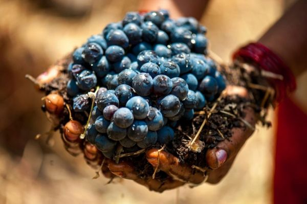 Photo for: Wineries to checkout near Mumbai